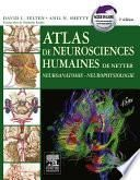 Atlas de neurosciences humaines de Netter